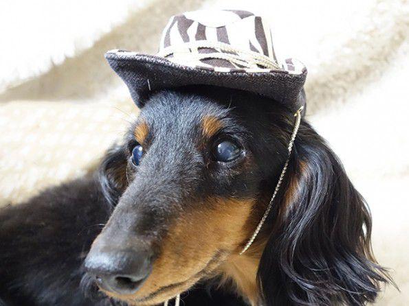 モデル犬 ダックス