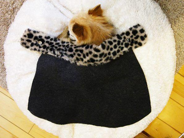 チワワの毛布